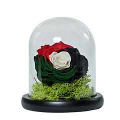 Impressive Uae Flag Colored Rose