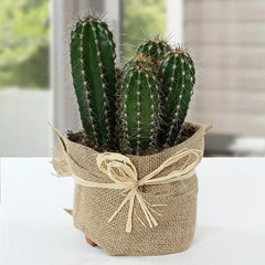 Cactus Jute Wrapped Potted Plant