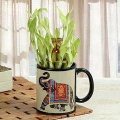 Lucky Bamboo In Printed Mug