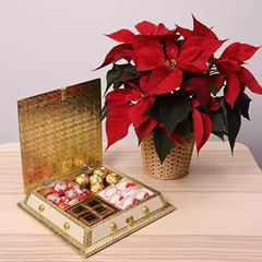 Chocolates and Poinsettia Plant Combo