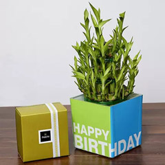 3 Layer Bamboo Plant and Patchi Chocolates For Birthday