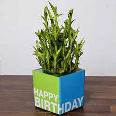 3 Layer Bamboo Plant For Birthday