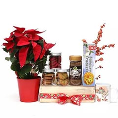 Christmas Magic Hamper